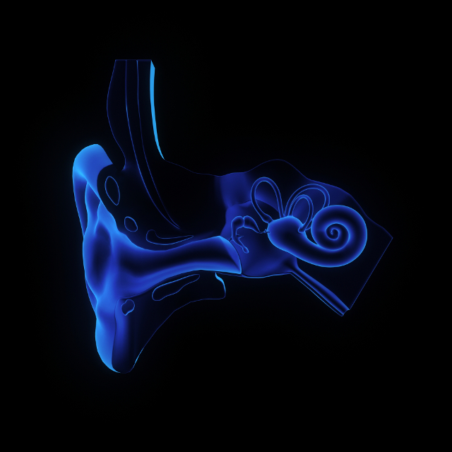 Our inner ear – the seat of intelligent adaptation